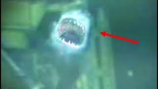 5-unsolved-shark-mysteries-that-can-t-be-explained