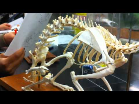 bird rabbit and feline skeleton