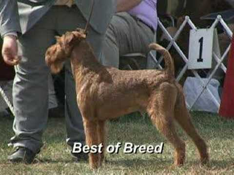 irish terrier club of america the 2007 irish terrier club of america national specialty 6295