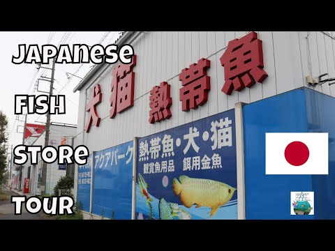 Local Fish Store Tour In Japan