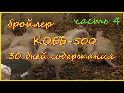 Бройлеры КОББ-500. Итоги содержания. Часть 4.