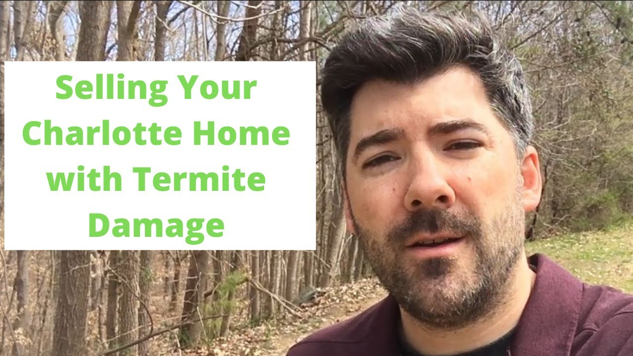How to Sell Your Charlotte Home with Termite Damage