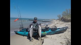 Two Nice King Salmon From a Kayak