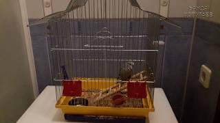 📚 ✉ Как пересадить купленного попугая из переноски в клетку