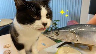 猫にサンマをあげたら大興奮!【うちの子3周年記念日/誕生日】
