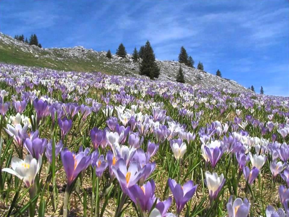 кроме картинка красота весны окружающий мир цвет