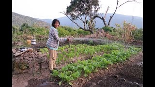 Losi løser klima-sult i Myanmar