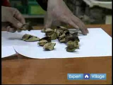 All About Chinese Herbal Medicine : Tangerine Peel & Chinese Herbal Medicine