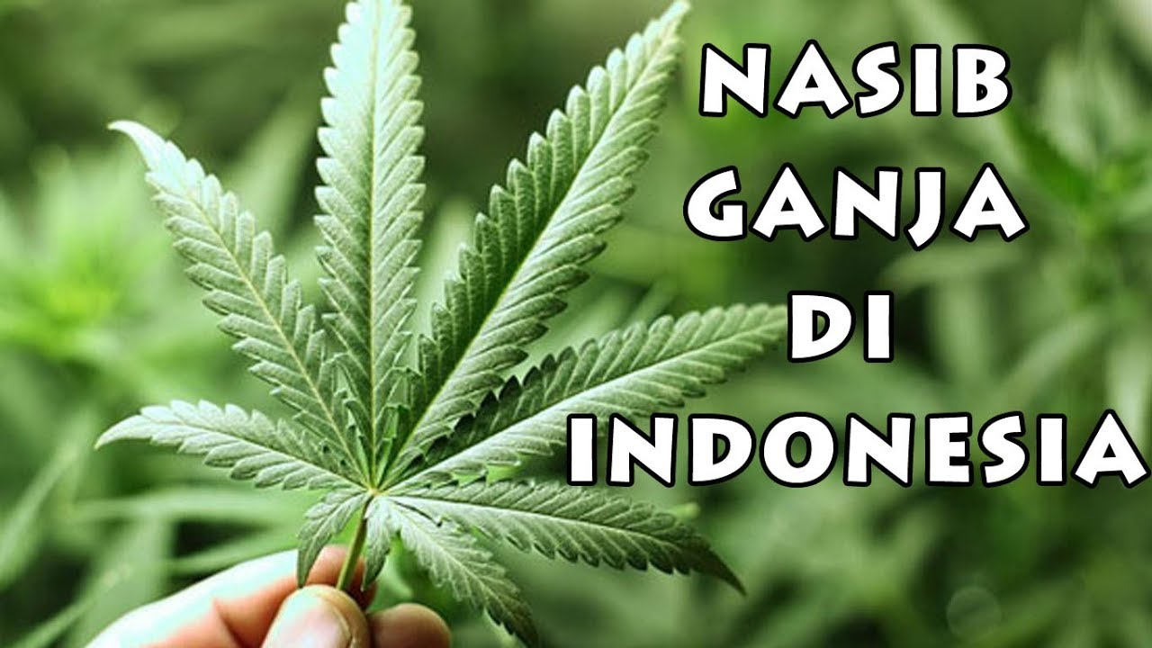 Legalitas forex di indonesia