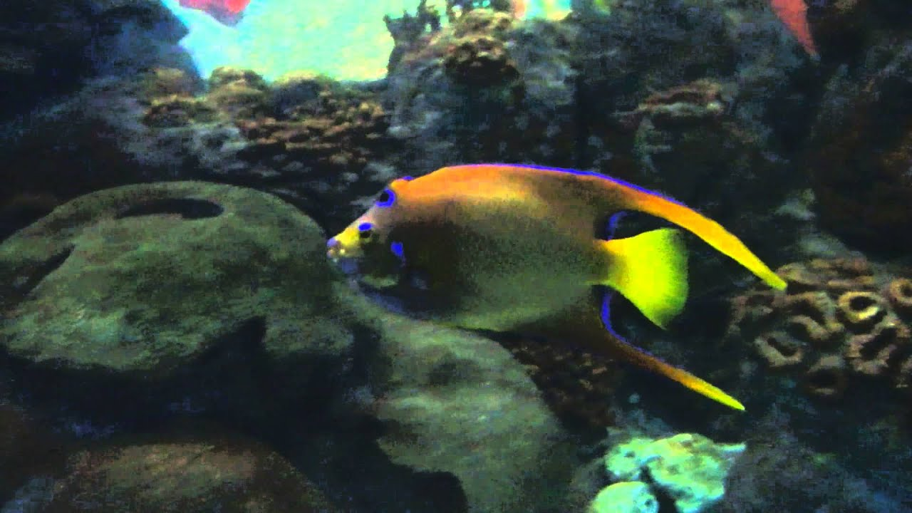Salt water fish at the texas state aquarium youtube for Texas saltwater fish