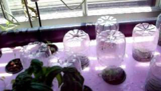 Children's Windowfarm With Greenhouse Bottles And Durso Siphon - July 24, 2010