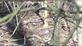 Stump Shooting With Tradidional Archery.wmv