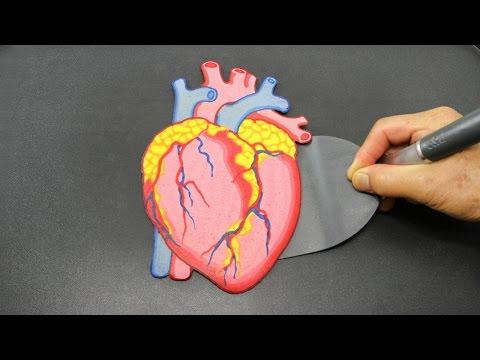 Human Heart PANCAKE