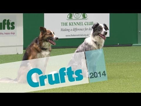 Obedience Winners 2014 | Crufts 2014