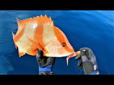 Reef Fishing With Soft Plastics, Jigs And Vibes