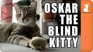 Oskar the Blind Kitty - Memed