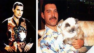 Фредди Меркьюри и его кошки, которых он очень любил