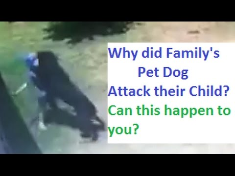 Dog Attacks Child. Why? (K9-1.com)
