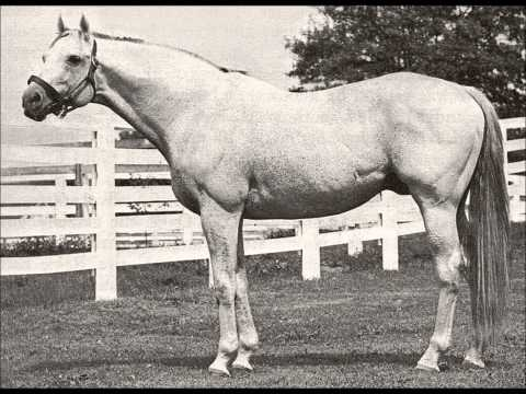 25 Greatest American Race Horses