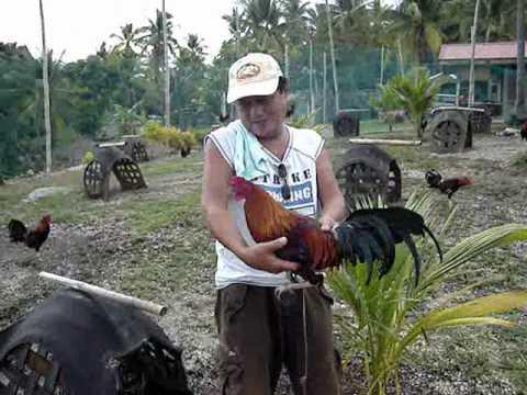 Red Mountain Farm - Lanao, Dalaguete, Cebu