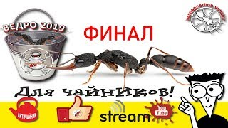 пересадка муравьев Harpegnathos venator в ВЕДРО 2019. Ответы на вопросы с донатов