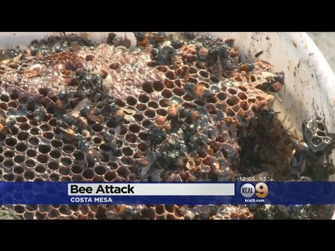 2 Stung Repeatedly After Bees Are Disturbed By Roofer In Costa Mesa