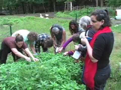 DIY Herbs - Nettles