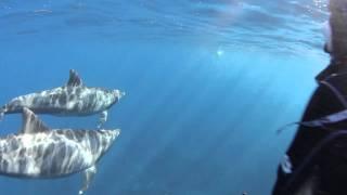 逃げるトビウオ!追うイルカ!その結末は?御蔵島のイルカ