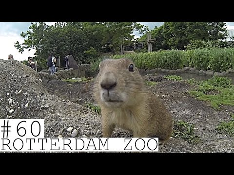 VISITING ROTTERDAM ZOO  (CASUAL FRIDAYS #60)