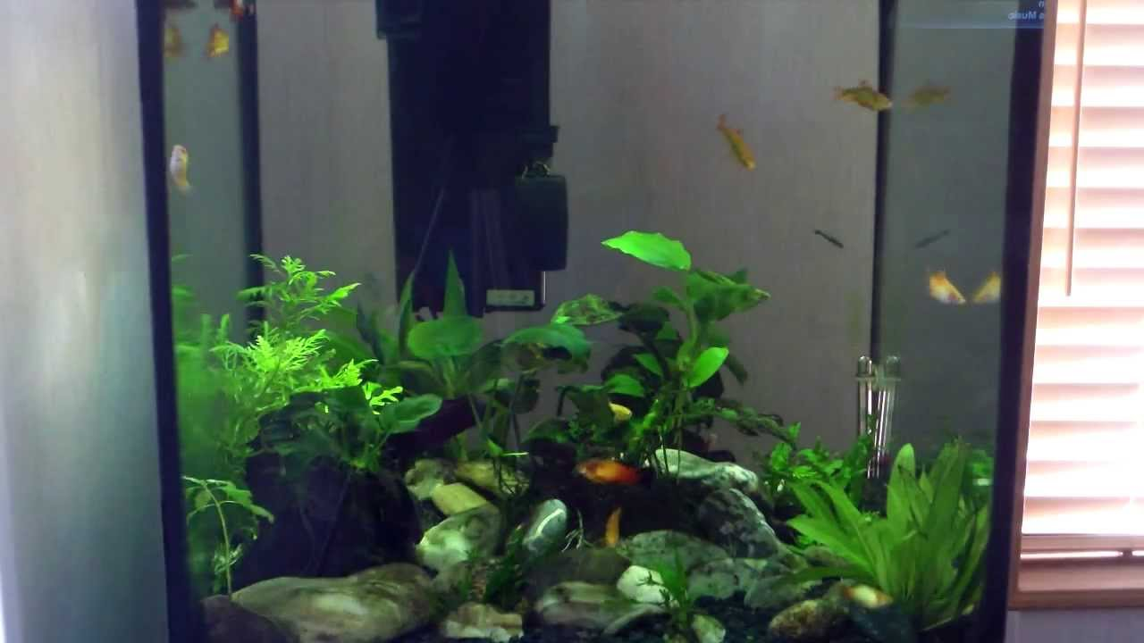 Freshwater aquarium fish maintenance - 27 Gallon Low Maintenance Planted Cube Aquarium View