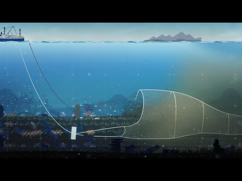 Protect The Arctic Deep From Harmful Bottom Trawling
