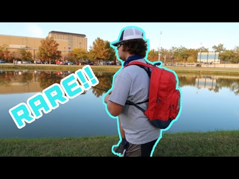 Fishing My CAMPUS POND For A Rare Fish Species!