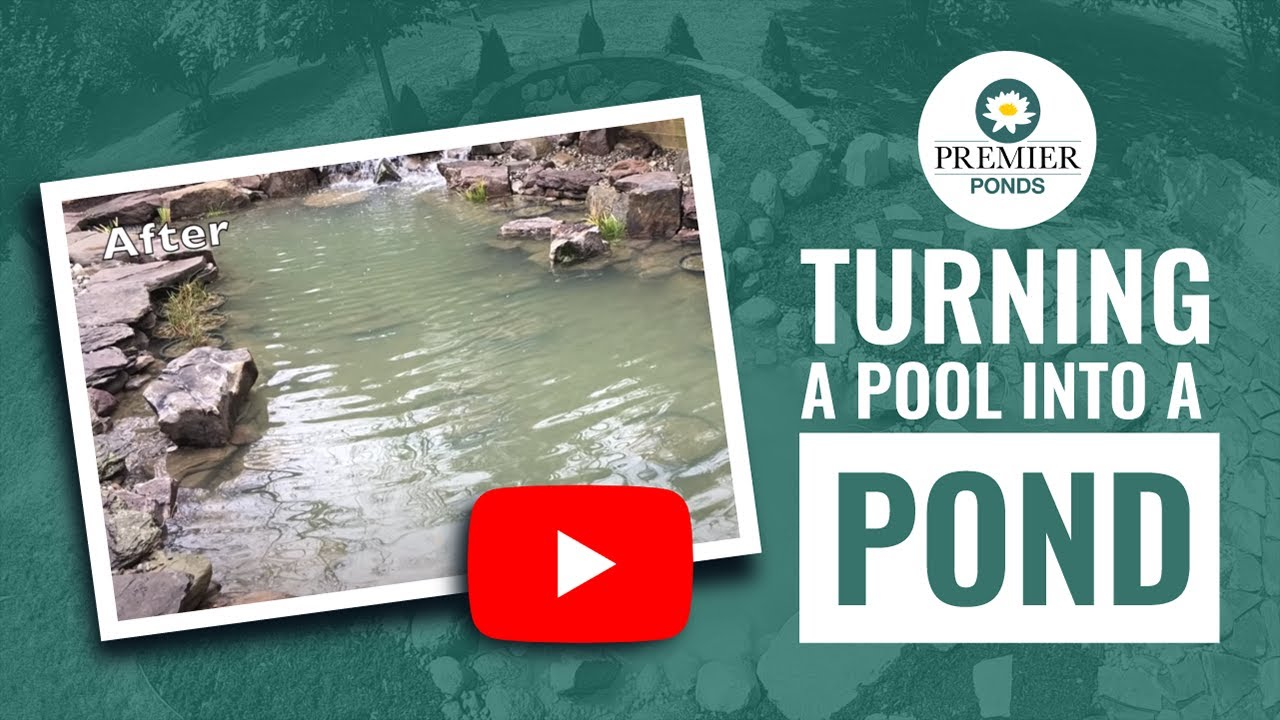 How To Turn A Pool Into Pond Premier Ponds Of Maryland Dc And North Va