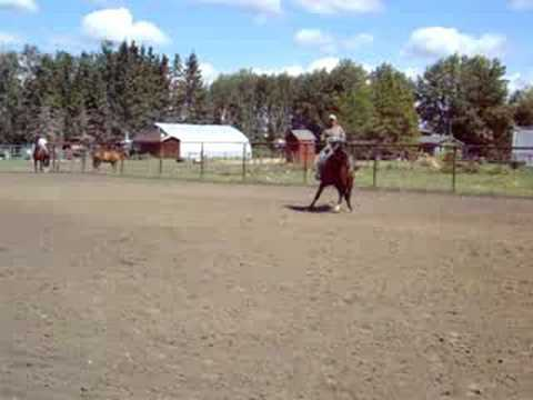 Reining Quarter horses for sale from YouTube · Duration:  5 minutes 35 seconds  · 13.000+ views · uploaded on 11.12.2008 · uploaded by sabinoreiner