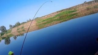 Огромный сазан на фидер. FULL HD. Астрахань. Река Подстепка. Huge carp on the feeder. FULL HD.
