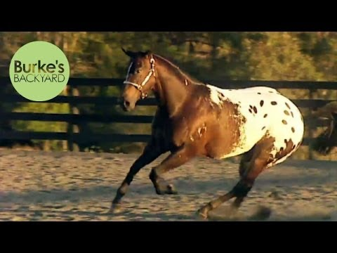 Burke's Backyard, Appaloosa Road Test