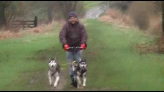 Training Drifting Sand Kennel Siberian Husky Racing Team.avi