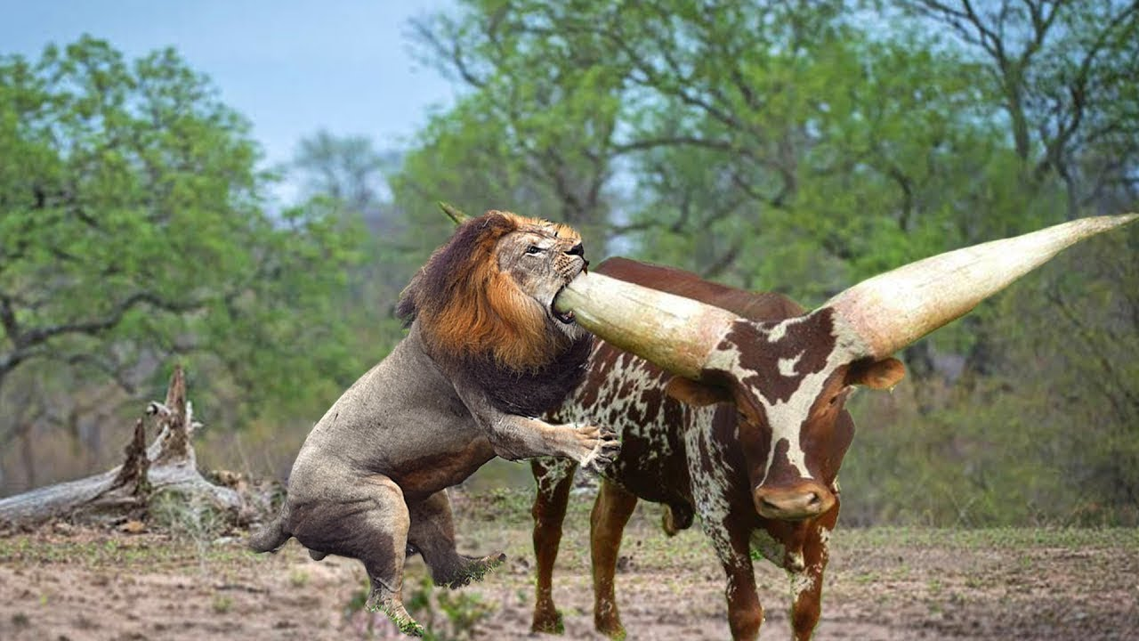 Download Top 14 CRAZIEST Animal Fights Caught On Camera