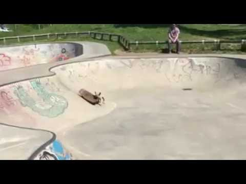 Skateboarding Frenchie