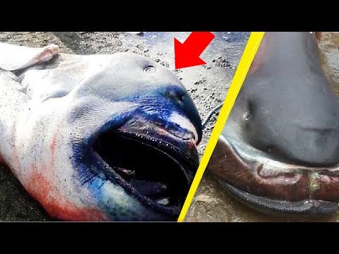 5 Most Mysterious Creatures Caught In the Philippines!
