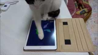 "「Cat Fishing 2」というゲームです。 It is a game of ""Cat Fishing 2""."