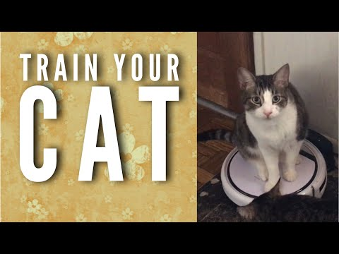 Saturday Is Caturday   How To Get Your Cats To Love The Robot
