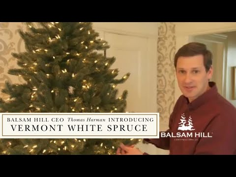 Balsam Hill Ceo Thomas Harman Fluffs Vermont White Spruce Christmas Tree You