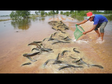 OMG! Catch Fish On The Road - Flood Water Fishing In Cambodia With A Fisherman Using Net Hand