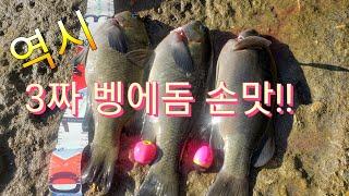 Download lagu 2짜만 잡다 3짜 손맛 최고 벵에돔낚시 Opaleye rock fishing MP3
