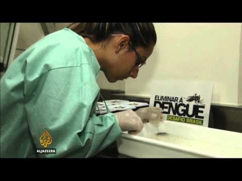 Brazil launches new fight against dengue fever