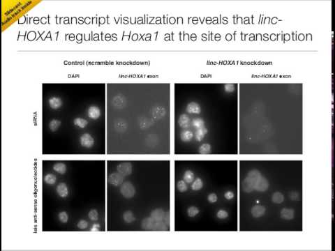 linc-HOXA1 is a non-coding RNA that represses Hoxa1 in cis