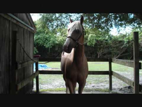 Horses- The Warren Brothers