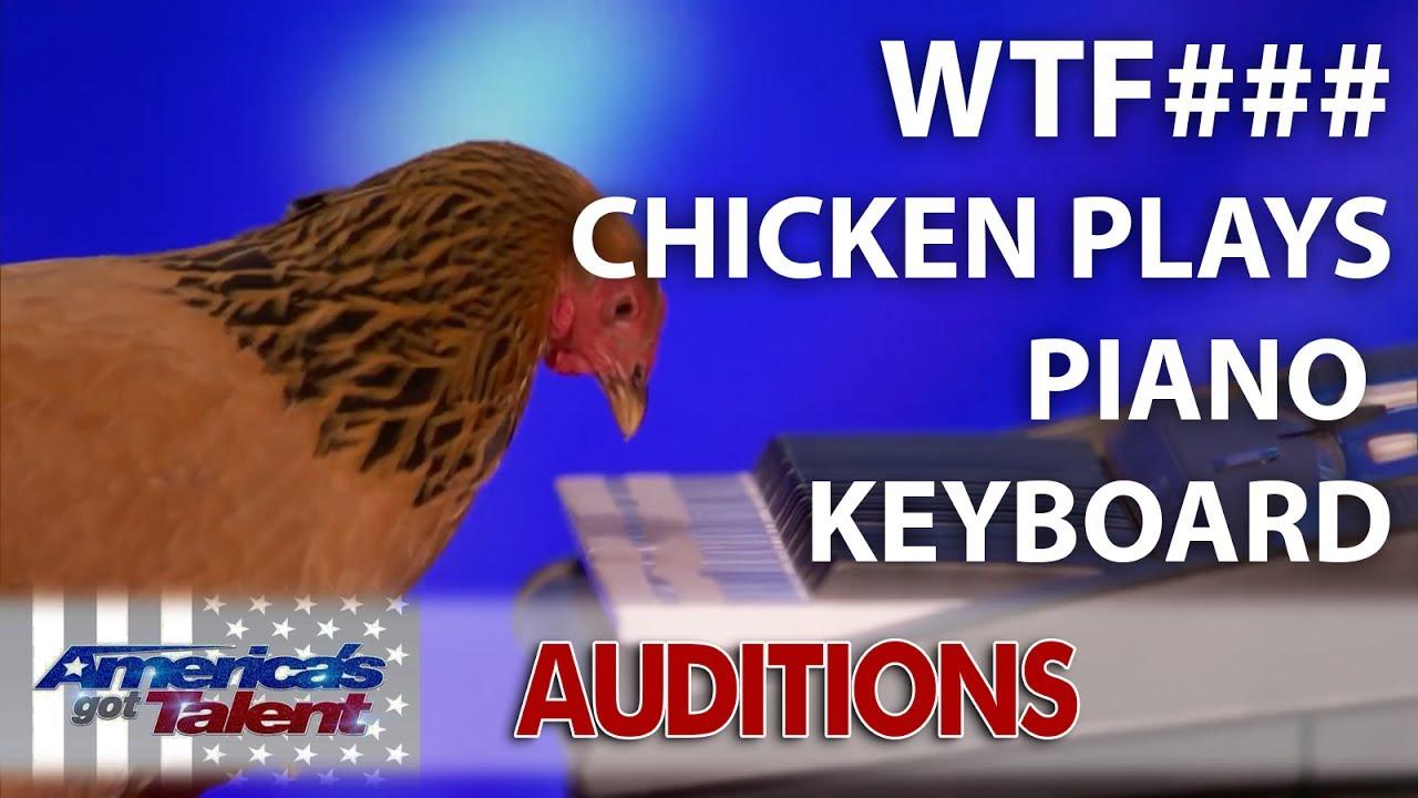 Image result for Jokgu of the Flockstars: Chicken Plays Patriotic Tune on Keyboard - America's Got Talent 2017