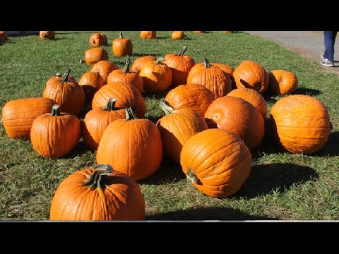 Pumpkin Patch Picking Farm Theme Song Pictures Kids Prank Vlog Halloween Children Preschoolers Boo